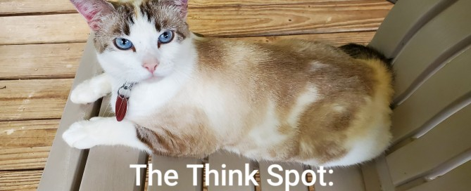 Photo of Duchess the cat, by Pastor Bo Wagner