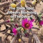 Flowers Blooming In The Desert
