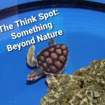 """""""Something Beyond Nature"""""""